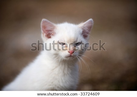 Small white kitten with angry look on its face