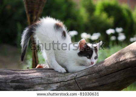 Small white kitten with black spots scratching nails on tree - stock photo