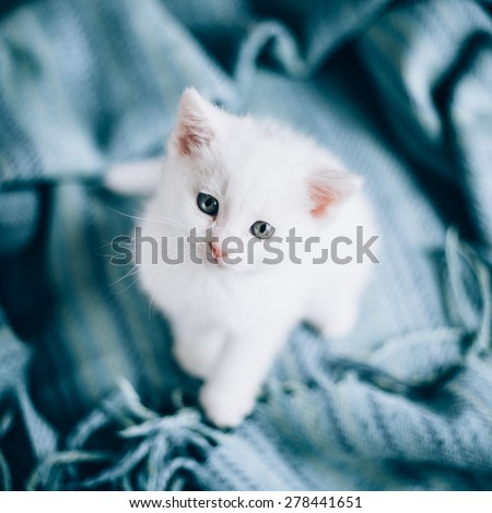 Small white kitty on blue background. Kitty is very cute./Small white kitty - stock photo