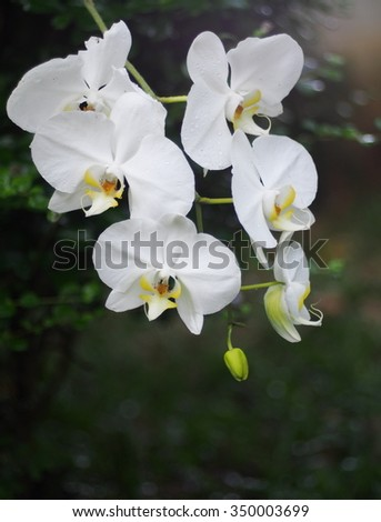 small white orchids outdoor under natural sunlight on a sunny day with natural romantic bokeh background