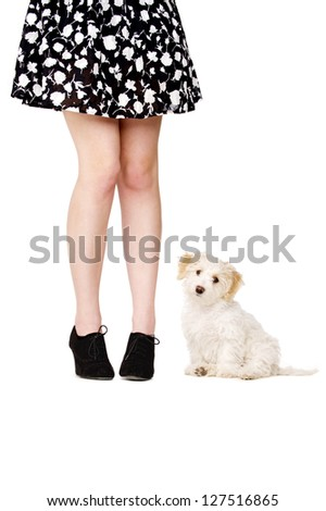 Small white puppy sat next to a woman's legs looking at the camera - stock photo