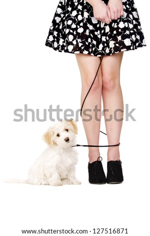 Small white puppy sat next to a woman's legs tangled with a black lead