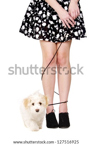 Small white puppy walking with her lead tangled around a woman's legs isolated on a white background