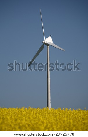 small wind turbine stands in a field of oil seed rapeseed / canola with blue skies