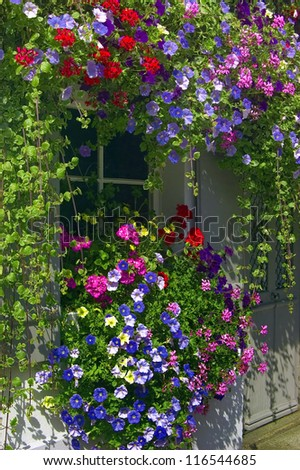 Small window framed from balcony plants blooming in many colors - stock photo