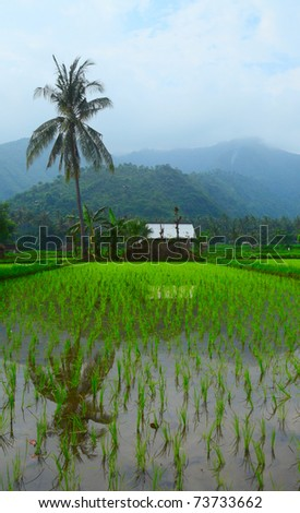 Small wooden house in tropical forest near rice field and palm tree - stock photo