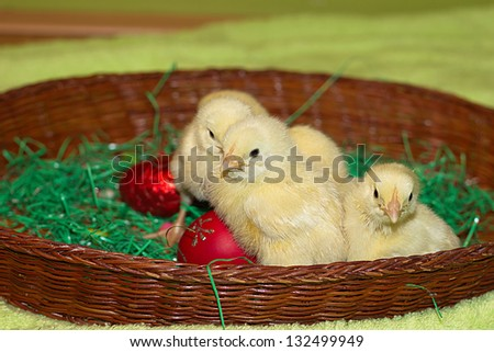 small yellow chicks, best focus on the front two small chicken,  best focus on the edge of the basket