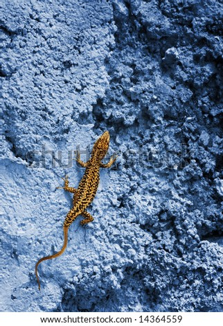 Small yellow lizard on a blue rock