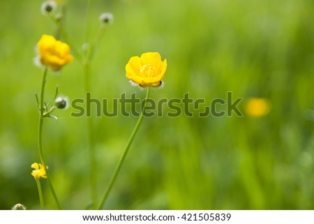 Small Yellow Wildflowers background (shallow depth of field) - stock photo