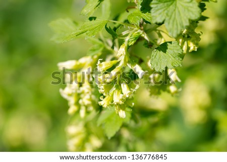 small yellowish flowers in nature