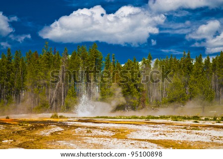 Small yellowstone geyser erupting against tall pine trees and summer sky - stock photo