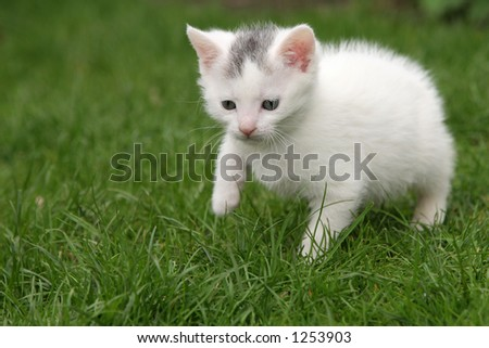 Small young cat walking a bit hesitantly through the garden - stock photo