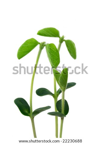 Small young plants - stock photo