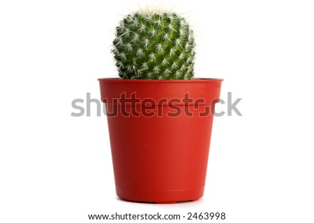 Smalll cactus isolated over white background - stock photo