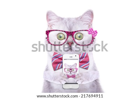 Smart beautiful british cat photographed themselves on the phone. Funny animals. Trendy cat dressed in beautiful clothes. Hipster cat - stock photo
