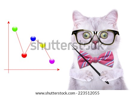 Smart beautiful british cat with a business graph. Funny animals. Trendy cat dressed in beautiful clothes - stock photo