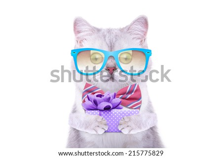 Smart beautiful british cat with a gift box. Funny animals. Trendy cat dressed in beautiful clothes.  - stock photo