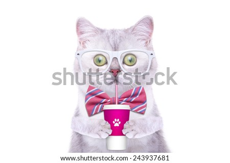 Smart beautiful british cat with a milkshake. Funny animals. Trendy cat dressed in beautiful clothes