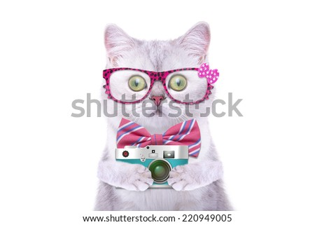 Smart beautiful british cat with a photocamera. Funny animals. Trendy cat dressed in beautiful clothes - stock photo