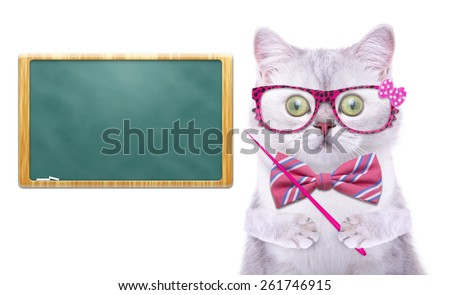 Smart beautiful british cat with a school board. Funny animals. Trendy cat dressed in beautiful clothes - stock photo