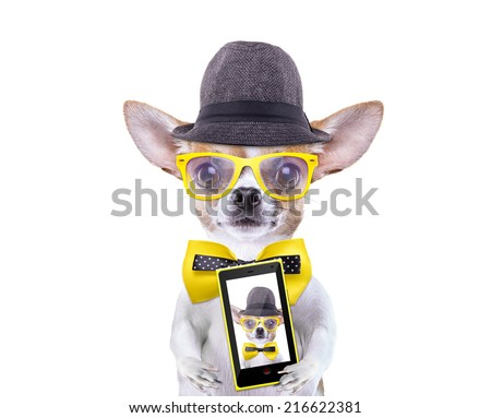 Smart beautiful dog chihuahua photographed themselves on the phone. Funny animals. Fashionable dog dressed in beautiful clothes. Hipcter dog - stock photo