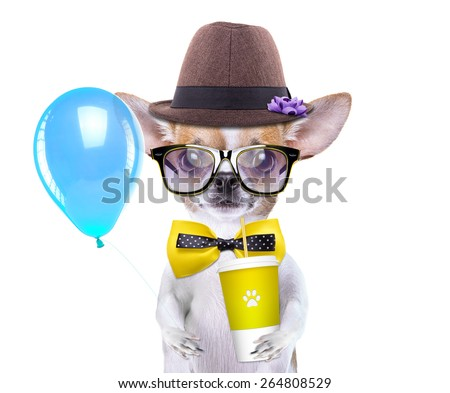Smart beautiful dog chihuahua with a cup. Funny animals. Fashionable dog dressed in beautiful clothes