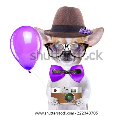 Smart beautiful dog chihuahua with a photocamera. Funny animals. Fashionable dog dressed in beautiful clothes. Hipster dog - stock photo