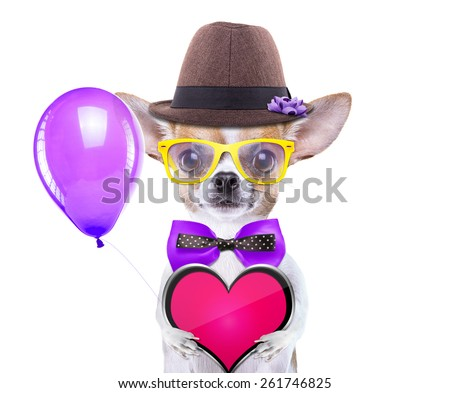 Smart beautiful dog with icon heart. Funny animals. Fashionable dog dressed in beautiful clothes. Valentine's day holiday - stock photo