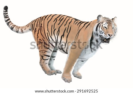 Smart bengal tiger on white background