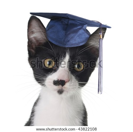 Smart cat - stock photo