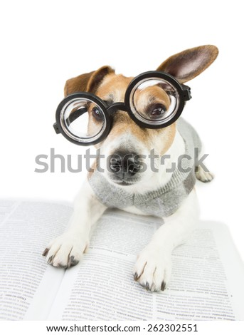 Smart cute puppy Jack Russel terrier student wearing glasses and a sweater studying reading book and summary of lectures. preparation for exams - stock photo
