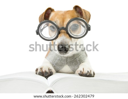 Smart cute puppy scientist wearing glasses and a sweater studying reading book and summary of lectures. preparation for doctoral dissertation - stock photo
