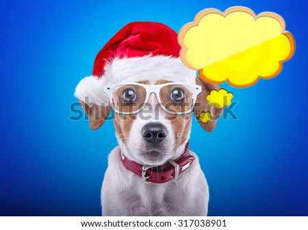 Smart dog in a Christmas costume. Dressed as Santa Claus. New Year's holidays - stock photo