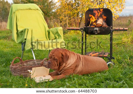 Smart Dog is Reading a Book While on Picnic, Lying in Autumn Garden 