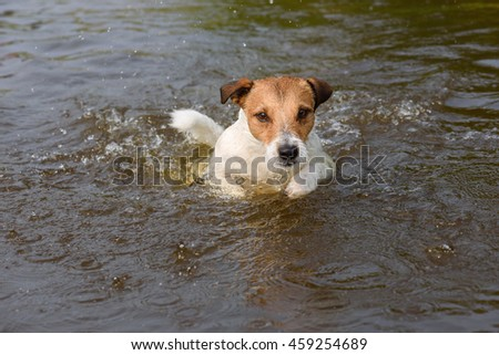 Smart dog looking fixedly while playing and swimming in water - stock photo