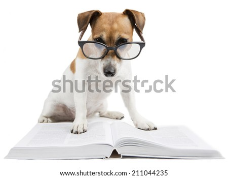 Smart dog reading book - stock photo