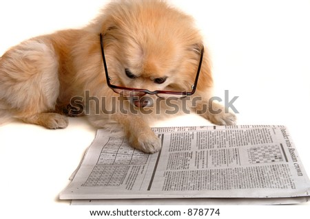 Smart Dog Reading The Newspaper