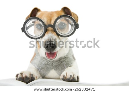 Smart fun dog is Studying. Glasses for poor vision - stock photo