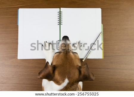 Smart Jack Russell terrier dog making notes in the album white sketch book. Empty space you can put your information - stock photo