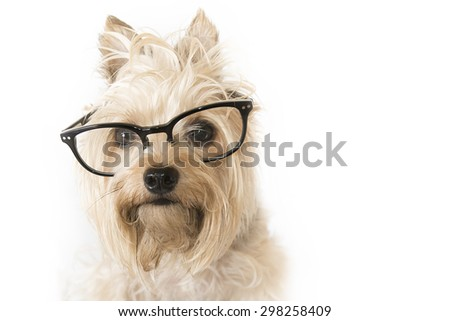 Smart looking dog with glasses on a white background
