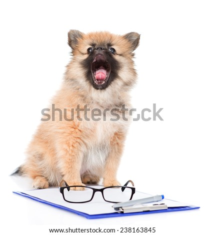 smart spitz puppy with glasses. isolated on white background - stock photo