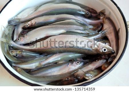 Smelt fish - stock photo