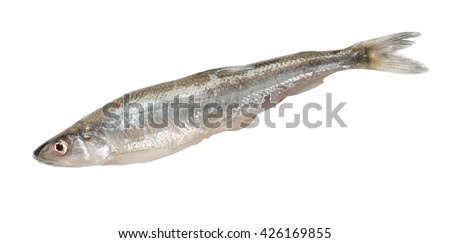 Smelt fish isolated on white background