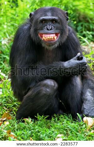 smile - stock photo