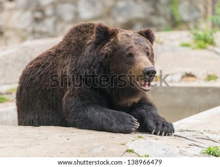 smile bear - stock photo