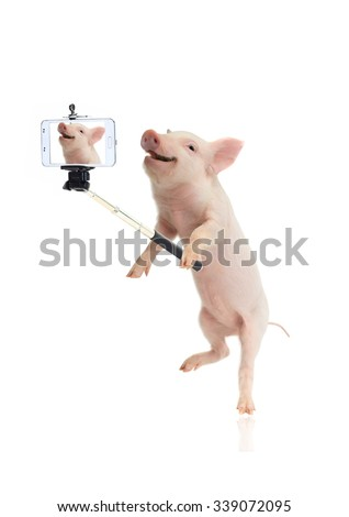 smile pig taking a selfie together with smartphone camera - stock photo