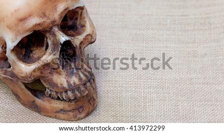 smile skull - stock photo