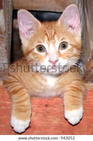 smiley kitty - stock photo