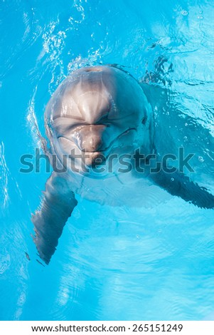 Smiling bottlenose dolphin looking at you from the pool - stock photo