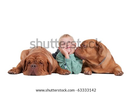 Smiling boy lying between two huge dogs, isolated on white background